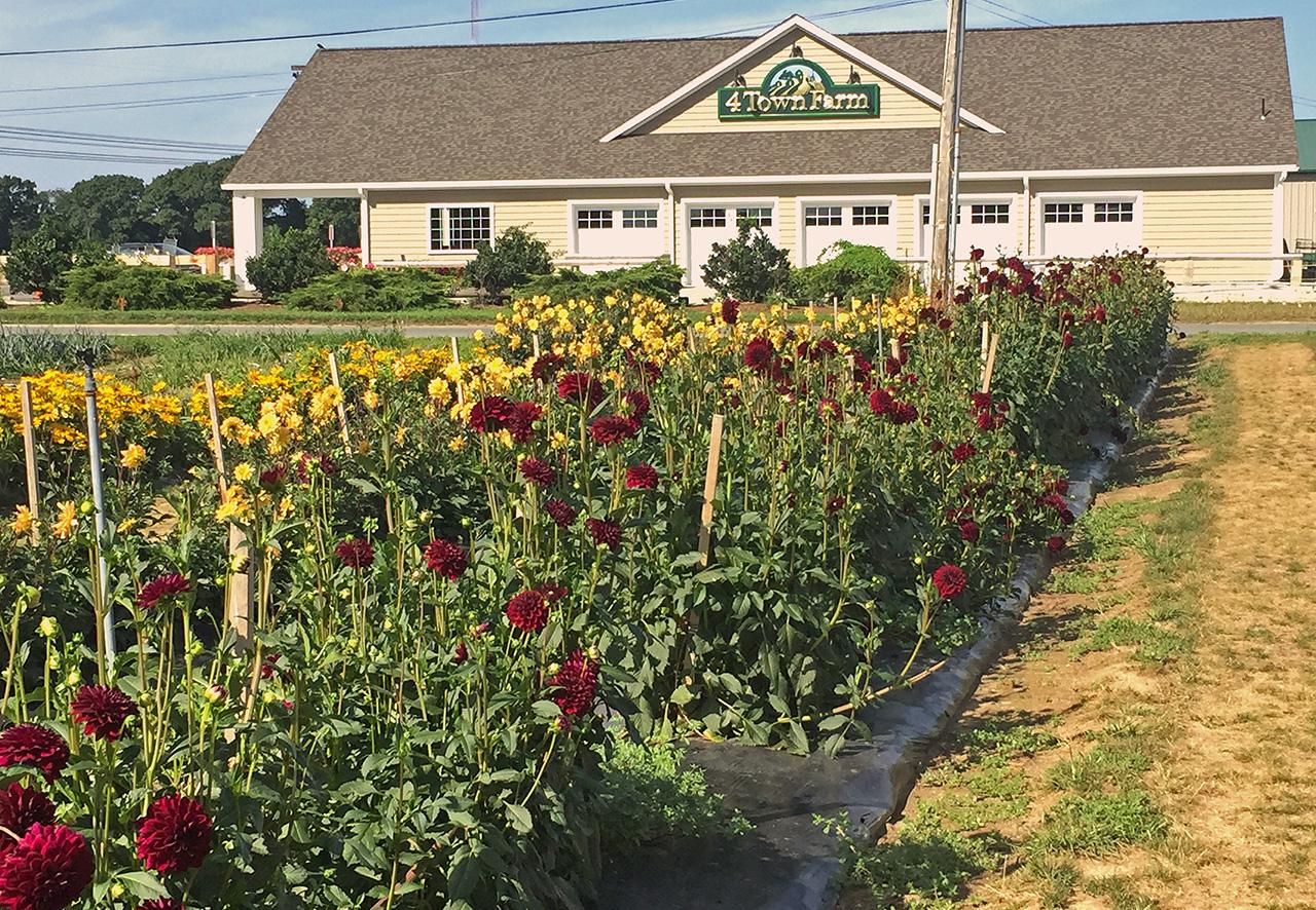 Home Four Town Farm